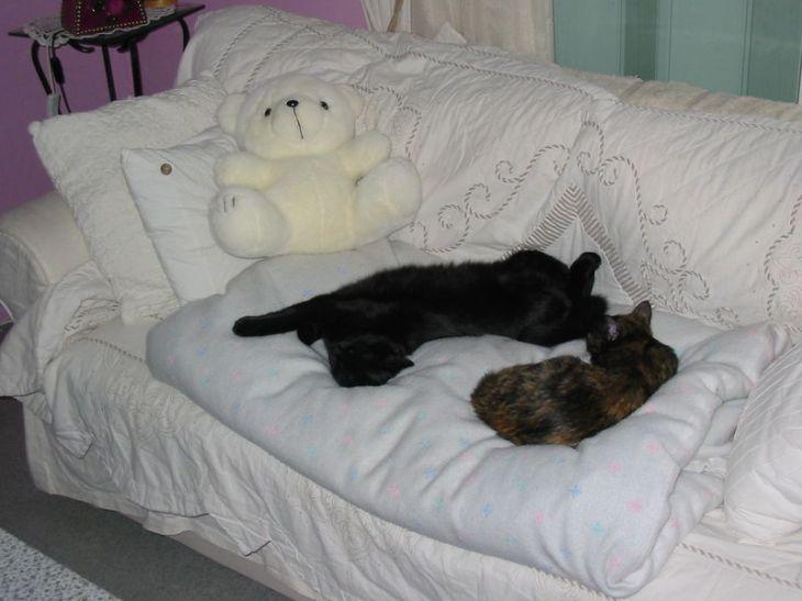 photo de mes deux chats qui dorment ensemble