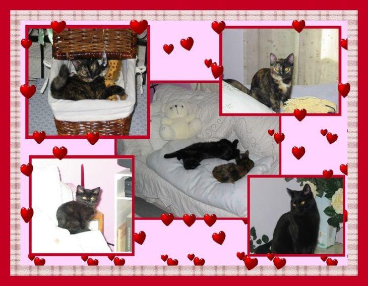 photo de mes deux petits chats, Chipie et Frimousse 13 et 17 mois