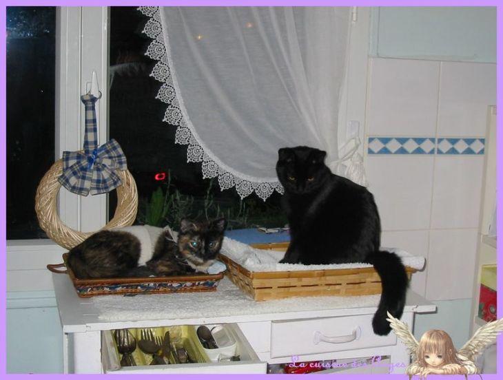 photo des deux chats dans leurs paniers