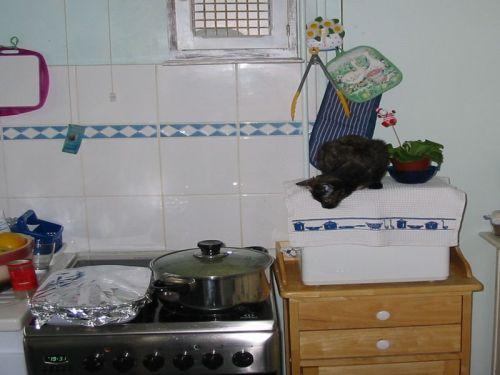 Photo de ma petite chatte Frimousse, surveillant ce qui se passe dans mes casseroles