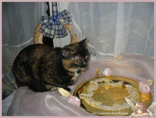 Photo d'un petit chat écaille de tortue