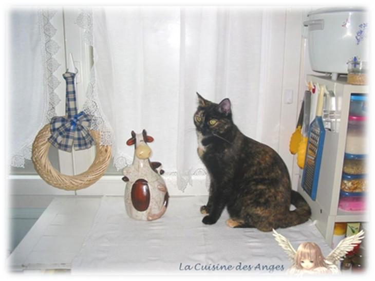 """Photo de chat """"écaille de tortue"""""""