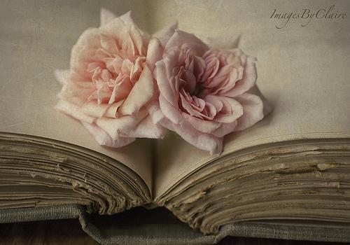 """Résultat de recherche d'images pour """"rose et livre"""""""