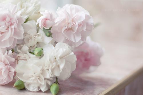 Fleurs roses et blanches