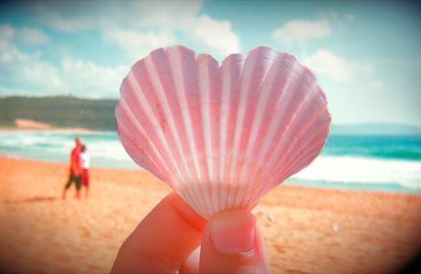 coquillage rose en forme de coeur