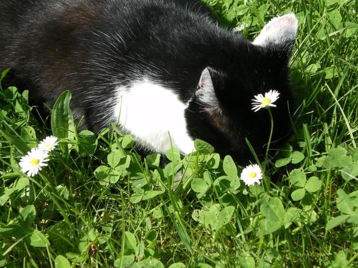 Photo de Mimine, petite chatte noire et blanche