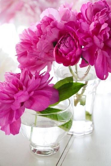 Petit bouquet de pivoines rose fuschia dans un vase transparent