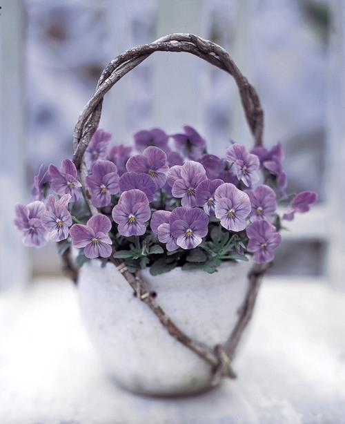 Petit bouquet de violettes