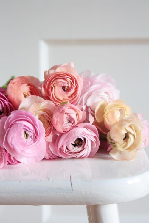 pivoines roses sur un tabouret blanc