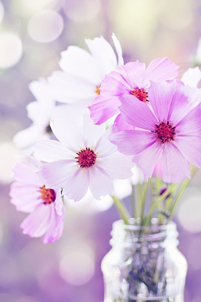Fleurs blanches et fleurs mauves dans un petit vase transparent