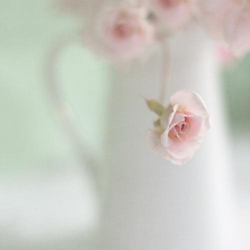pichet blanc avec des roses roses