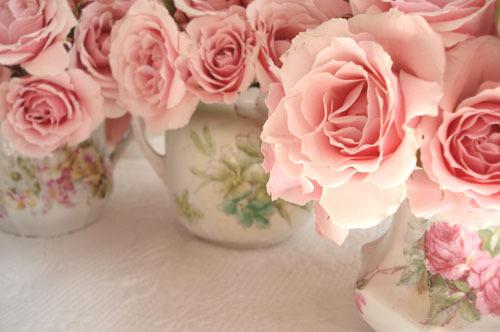 roses roses dans des tasses en porcelaine