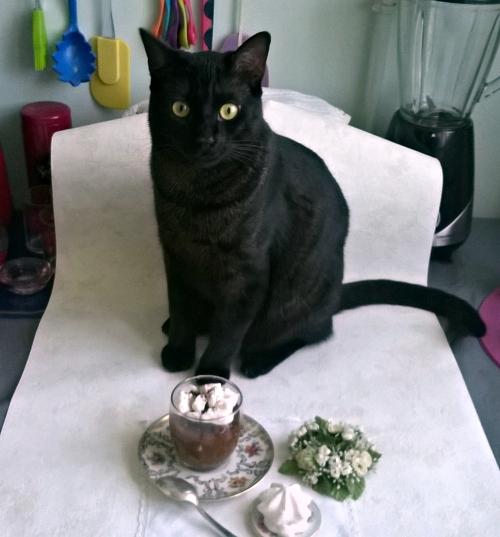 photo d'un chaton noir