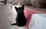 photographie illustrant un texte contre l'abandon d'animaux