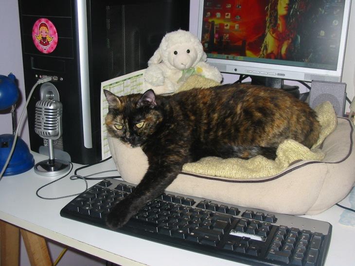 Photo de ma petite chatte Frimousse