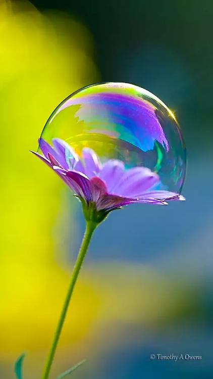 fleur et bulle de savon