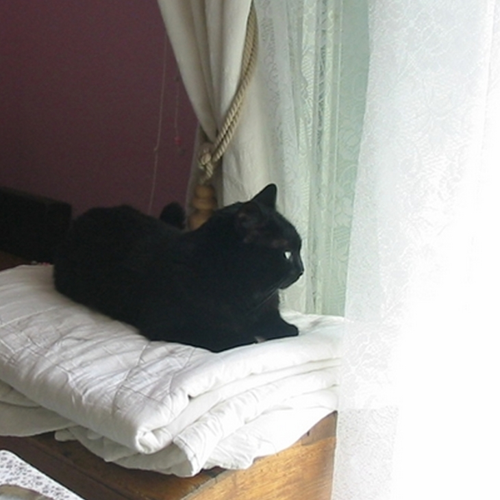 Photo de chat noir
