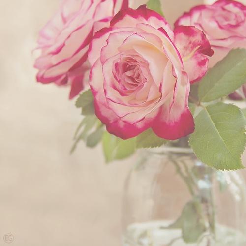 roses blanches et roses en bouquet