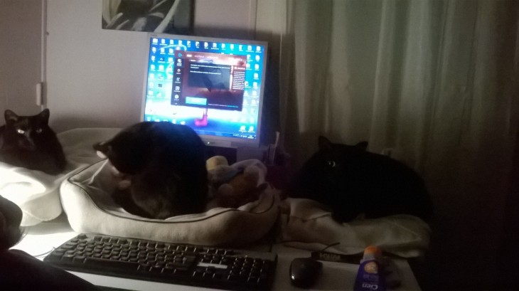 Mes trois chats noirs